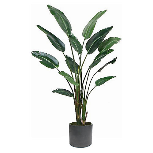 Travelers Palm w/ Black Planter, Faux