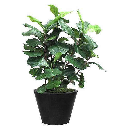 """36"""" Fiddle-Leaf Fig w/ Tapered Planter, Faux"""
