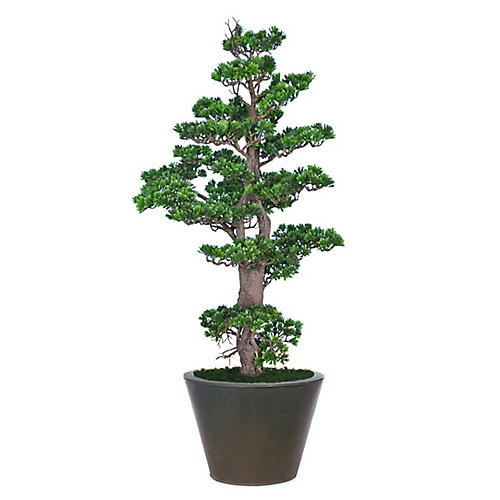 "54"" Bonsai w/ Cylindrical Planter, Faux"