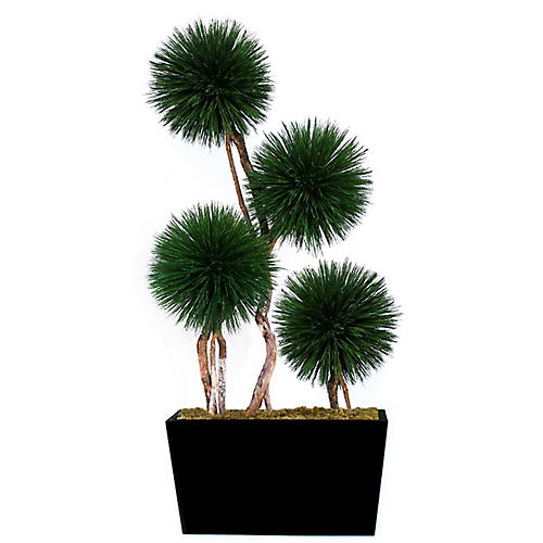 "96"" Dracaena Plant w/ Tapered Vessel, Preserved"