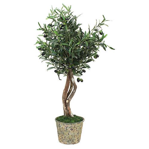 "36"" Petite Olive Tree w/ Vessel, Faux"