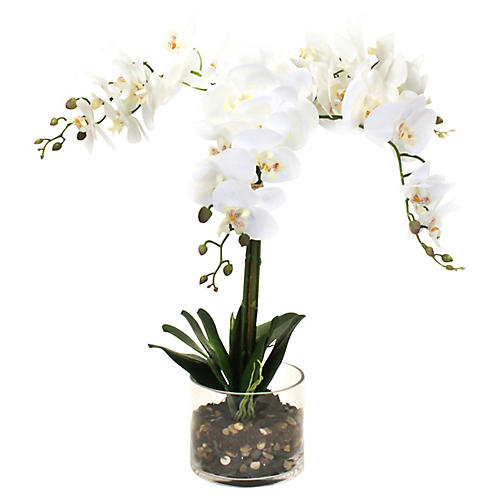 "26"" White Orchid w/ Cylindrical Vase, Faux"