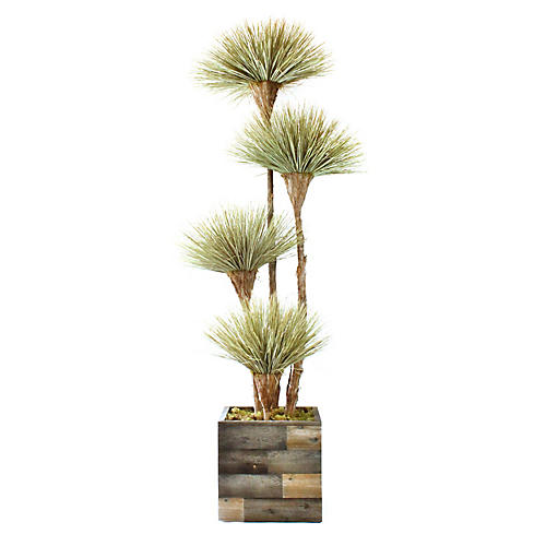 "120"" Tall Dracaena w/ Square Vessel, Preserved"