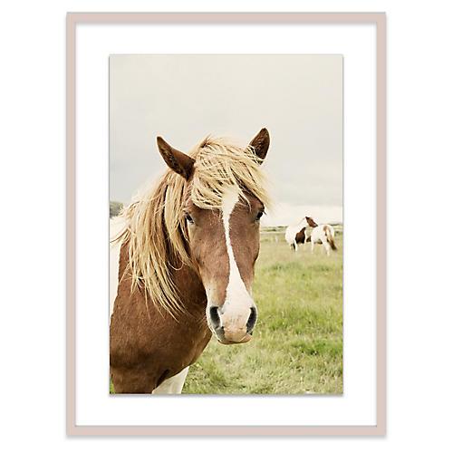 Christine Flynn, Icelandic Horse II