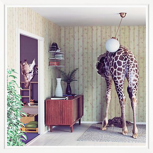 Stuck Giraffe