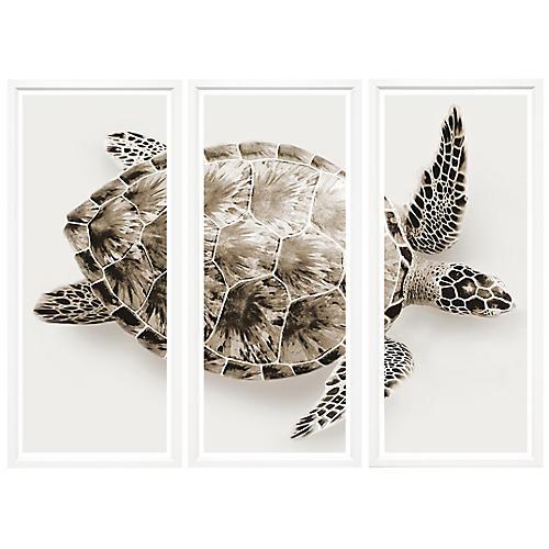 Sepia turtle Triptych