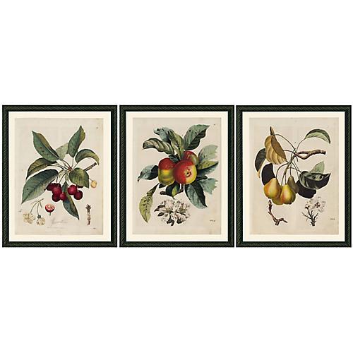 Smith & Co., Three Fruits