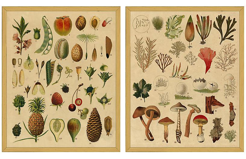 Smith & Co., Fruit & Mushroom Botanicals