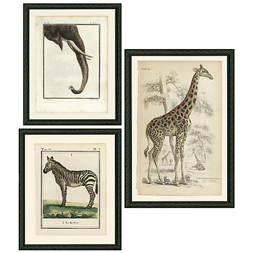 Smith & Co., Safari Animals
