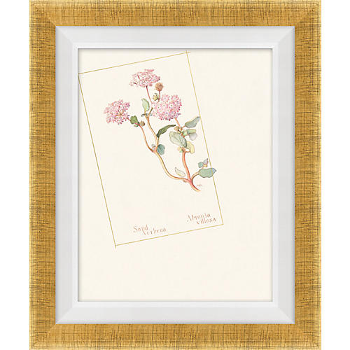 Floral Lithograph III