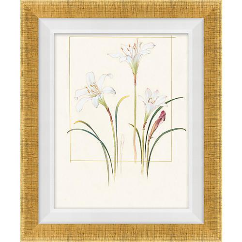 Floral Lithograph IV