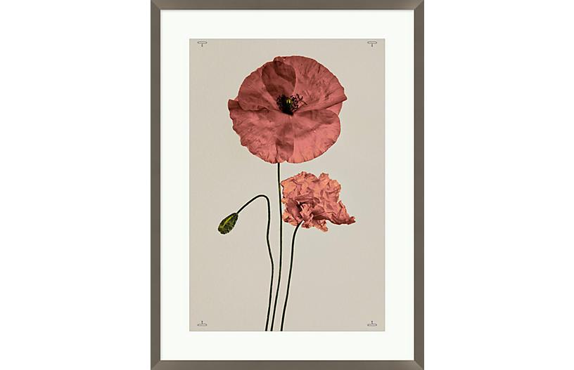 Poppy I