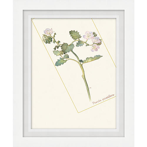 Floral Lithograph I