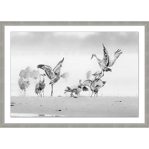 Sandhill Cranes in the Morning