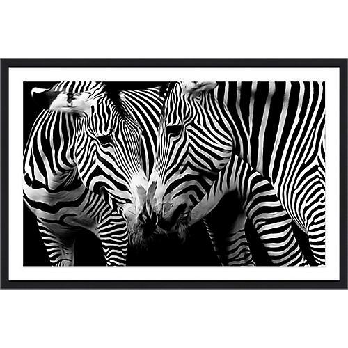 Zebra Snuggle