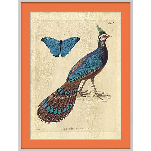 Orange Bird II