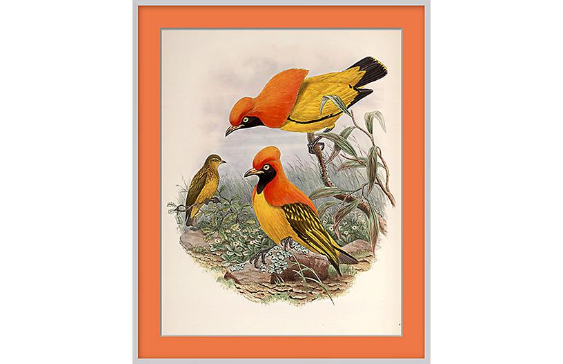 Orange Bird X
