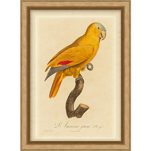 Orange Parrot I