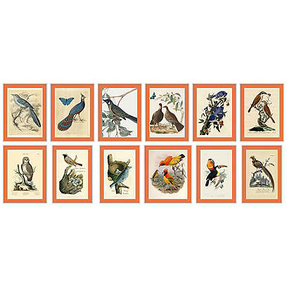 Orange Bird Set of 12