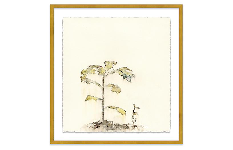 Mary H. Case, Botanical V