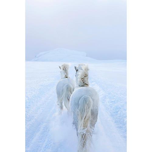 Drew Doggett, Winter's Dream