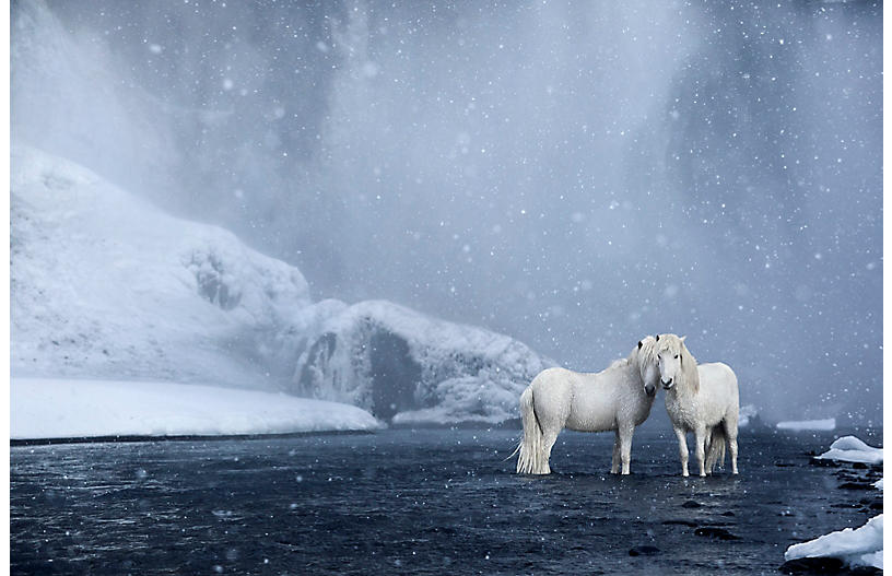 Image result for drew doggett iceland horses