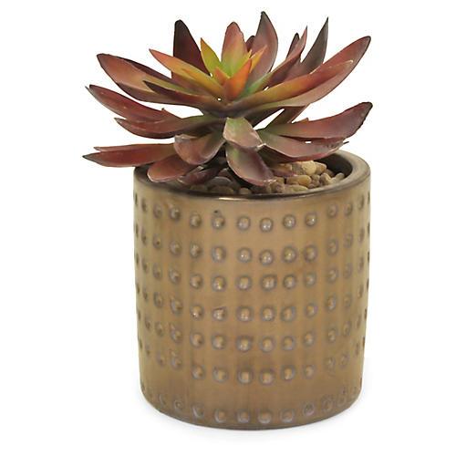 """8"""" Succulent Plant w/ Dimple Pot, Faux"""