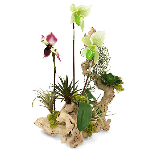 """23"""" Blooming Orchids on Grapewood, Faux"""