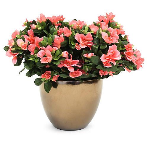 "15"" Peach Azalea Arrangement w/ Bell Planter, Faux"