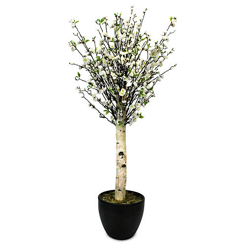 "60"" White Blossom Tree w/ Planter, Faux"