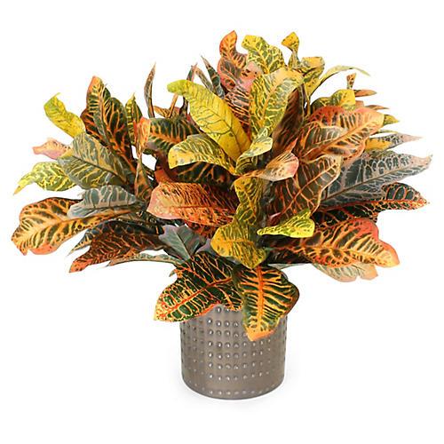 """23"""" Yellow Croton Plant w/ Textured Vase, Faux"""