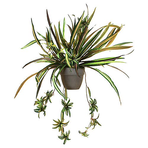 "28"" Spider Plant w/ Vessel, Faux"