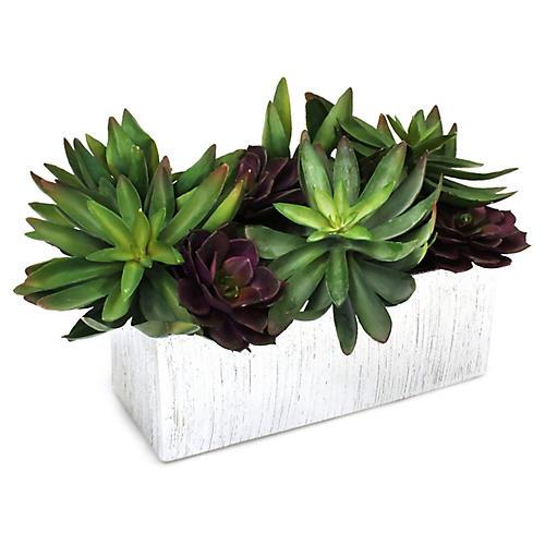 """14"""" Succulents w/ Textured Planter, Faux"""