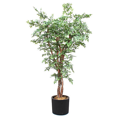 "90"" Ming Aralia Tree w/ Planter, Faux"