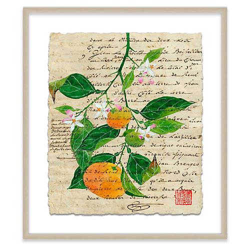 Gabby Malpas, Seville Oranges