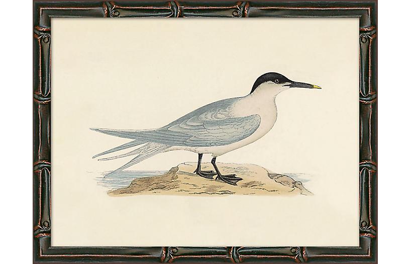 Sea Bird 1