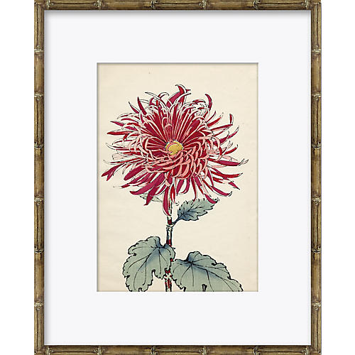 Asian Flower 1