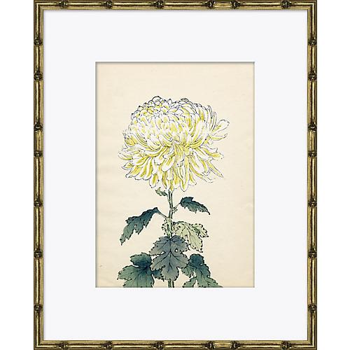 Asian Flower 3
