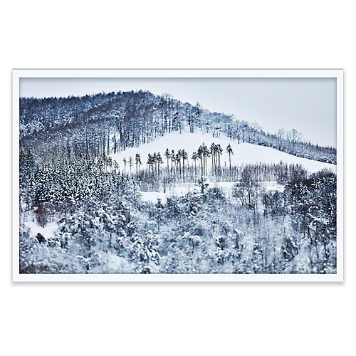 Pascal Shirley, Hokkaido Forest