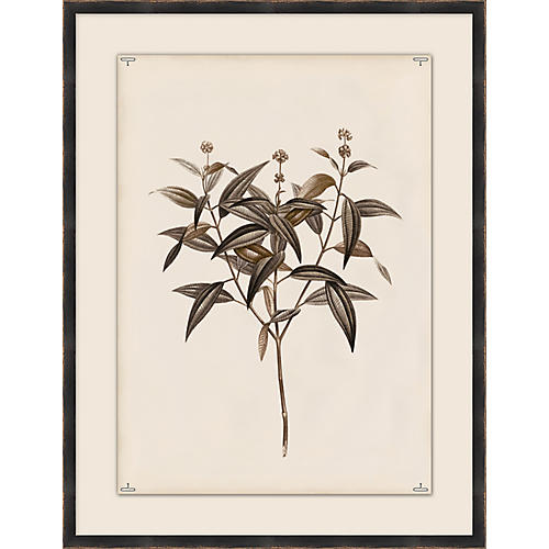 Botanical Study II