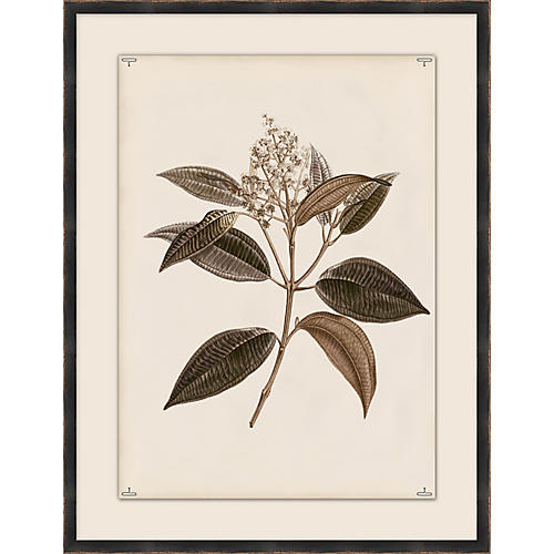 Botanical Study III