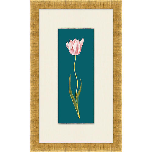 Lillian August, Royal Tulip II