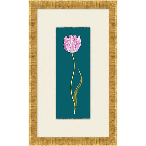 Lillian August, Royal Tulip IV
