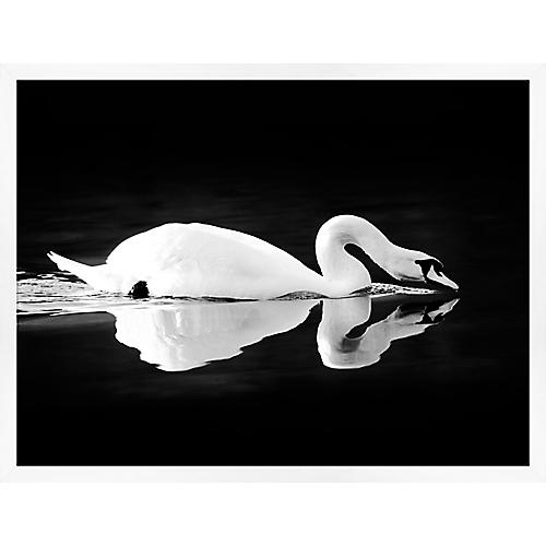 Lillian August, Swan on Black