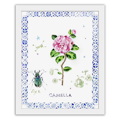 Cathy Graham, Camellia