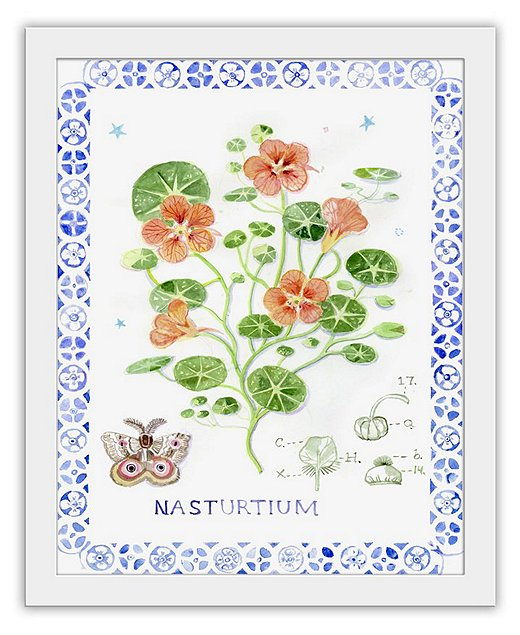 Artist Cathy Graham's depiction of a nasturtium is a whimsical interpretation of classic botanical illustrations.