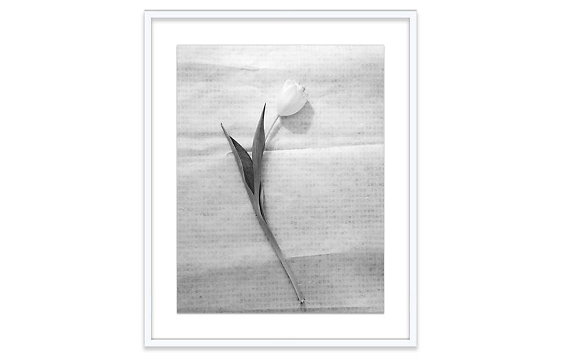 Amy Neunsinger, Tulip