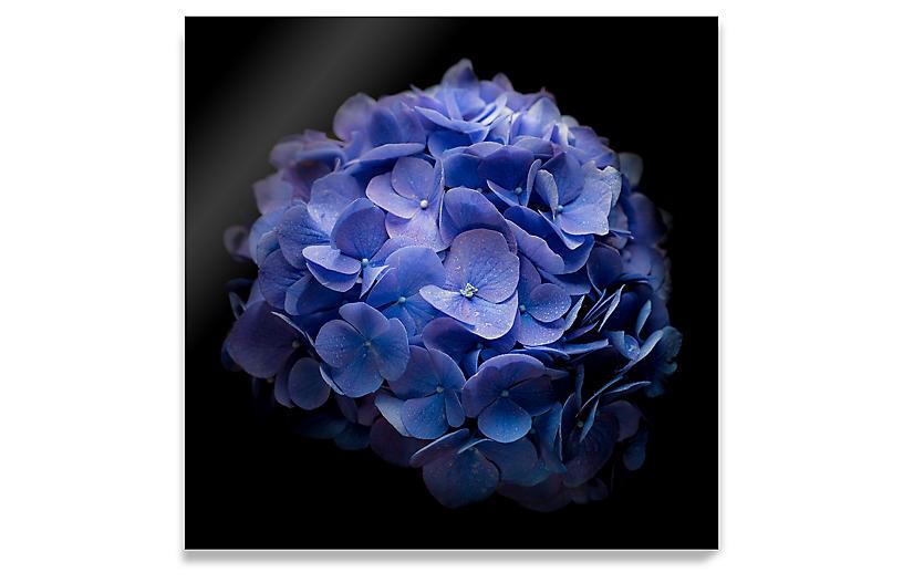 James Ogilvy, Blue Hydrangea
