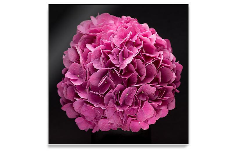 James Ogilvy, Pink Hydrangea