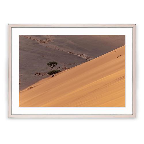 Richard Silver, Namibia Desert Trees